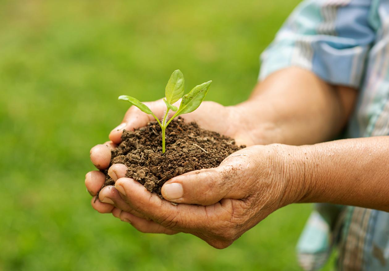 imagem sobre sustentabilidade